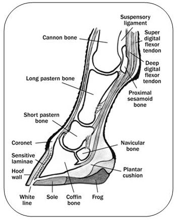 Tag Team Physical Therapystrength Conditioning further Lumbar Rotation additionally 03 Pain 20syndromes Degenerative 20spine 20diseases Functional 20neurosurgery furthermore Muscle Of The Month The Hamstrings further Exercise Pictures. on diagram of knee and leg